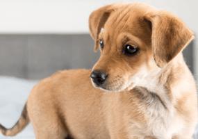 Voor Honden