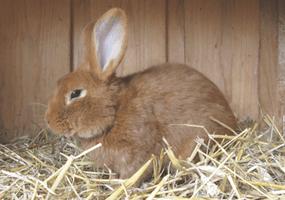 Heeft jouw konijn diarree?