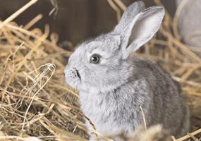 Waarom mag hooi niet ontbreken in het dieet van jouw konijn?