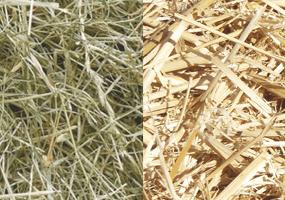 Wat is het verschil tussen hooi en stro?