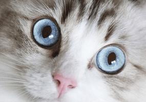 Hoe herken je vuurwerkangst bij jouw kat?