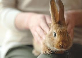 Hoe knip je de nagels van een konijn?