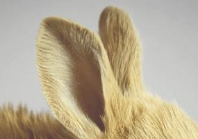 Oormijten bij je konijn?
