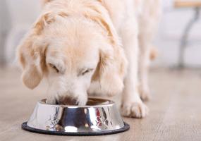 Waarom kiezen voor een seniorvoeding voor je hond?