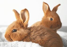 Kiezen voor één of twee konijnen?