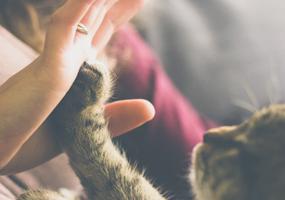 Urine opvangen bij je kat