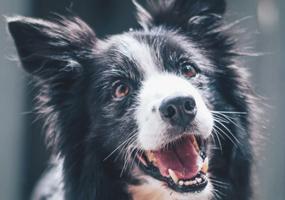Urine opvangen bij je hond