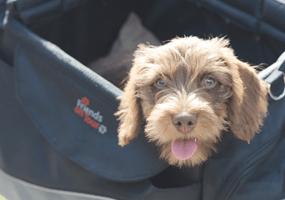 Hond mee op vakantie? Vergeet de verzekering niet!