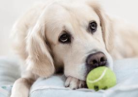 Geef jij jouw hond verantwoord speelgoed?