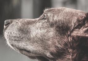 6 tips voor de verzorging van een oudere hond