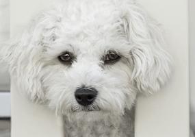 Vuurwerkangsttips voor 31 december voor honden