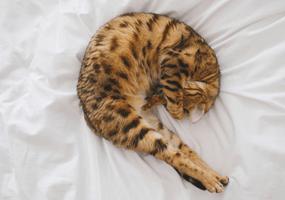 Hoe herken je een wormbesmetting bij jouw kat?